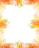 De transparante herfst verlaat frame Stock Fotografie