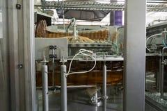 De transportband voor het vullen van HUISDIERENflessen, bij de brouwerij worden gevestigd die Stock Fotografie