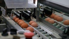 De transportbandproductielijn op verscheidene niveaus van de Eierproductielijn van kippeneieren van een gevogeltelandbouwbedrijf stock footage