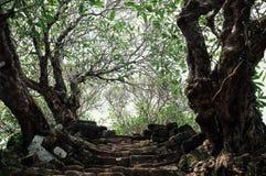 de treden die tot de hemel met bomen als deel van een oud monument Unesco leiden beschermden erfenis Wat Phu royalty-vrije stock foto