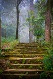 De treden van de steen in het bos Stock Afbeeldingen