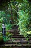 De treden van de steen in het bos Royalty-vrije Stock Foto's