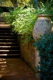 De treden van de tuin Stock Fotografie