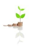 De treden van het geld en groene installatie Stock Afbeeldingen