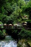 De trein die van de ezel Rivier en watervallen kruist Stock Fotografie