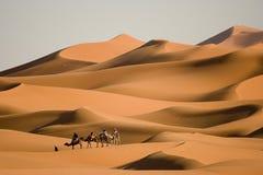 De trekking van de kameel Royalty-vrije Stock Afbeeldingen