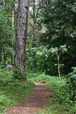 De Trekking van de wildernis Stock Foto's