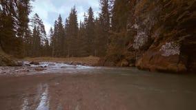 De Trentinoalt adige, een kleine rivier stroomt onder de rotsen van het hout stock videobeelden