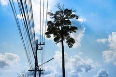 De tribune alleen grote boom met de kabel stock foto