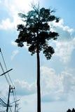 De tribune alleen grote boom met de kabel royalty-vrije stock fotografie
