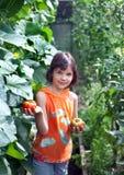 De tribunes van het meisje in een serre met tomaten Stock Foto