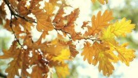 De trillende de herfstboom gaat dicht omhoog weg Royalty-vrije Stock Foto's