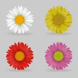 De trillende multi chammomile bloemen van het kleuren mooie madeliefje vector illustratie