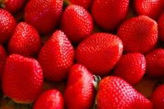 De Triomf van aardbeien Stock Foto