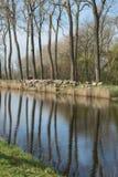 De troep van Damsevaart van schapen in België stock foto's