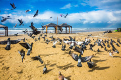 De troep van duiven het lawaaierig is vertrekt stock foto