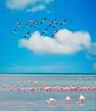 De troep van flamingo's royalty-vrije stock afbeelding