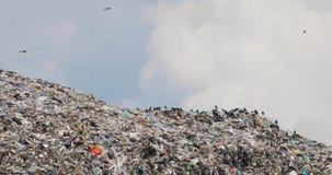De troep van kraaien eet zit en vliegt over reusachtige huisvuilheuvel op stortplaats recyclingsprobleem stock video