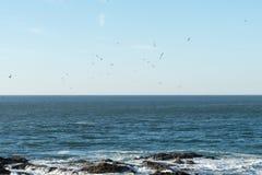 De troep van zeemeeuwen vliegt over het water op zoek naar vissen terwijl de golven in de rotsen breken stock fotografie