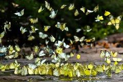 De troepen van vlinders leven in het bos, stock foto's