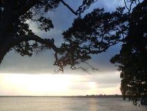 De trog reusachtige bomen van de avondhemel royalty-vrije stock afbeelding