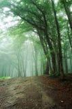 De trog van de weg een groen bos met mist stock fotografie