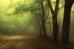 De trog van de weg een groen mistig bos