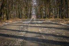 De trog van de weg het bos Stock Afbeeldingen