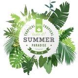 De tropische achtergrond van het de zomerparadijs stock illustratie