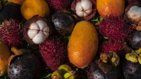 De tropische Achtergrond van Vruchten stock afbeeldingen