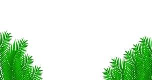De tropische animatie met palm doorbladert stock footage