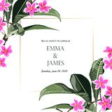 De tropische bloemen van wildernis exotische roze plumeria Tekstplaceholder in het midden royalty-vrije illustratie