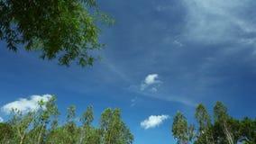 De tropische Horizon van het Klimaattime lapse met Treetops stock videobeelden