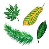 De tropische Inzameling van Bladeren isoleer vector Mooie reeks Detiledillustratie stock illustratie