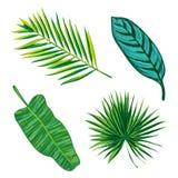 De tropische Inzameling van Bladeren isoleer vector Mooie reeks Detiledillustratie royalty-vrije illustratie