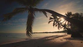De tropische mening van het paradijseiland van strand met jachten en palmen, die van onder de palmen, zonsopganglandschap, ochten