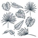 De tropische reeks van het installatiesblad, die op witte achtergrond wordt geïsoleerd Stethoscoop over wit wordt geïsoleerd dat  royalty-vrije illustratie