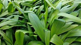 De tropische Textuur van het Blad Stock Foto