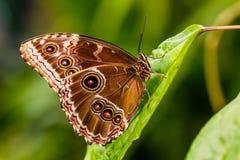 De tropische vlinder van Nice Stock Fotografie