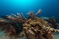 De tropische wateren van het Rode Overzees stock foto