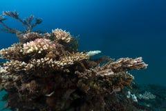 De tropische wateren van het Rode Overzees stock foto's