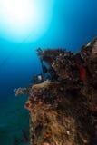 De tropische wateren van het Rode Overzees royalty-vrije stock afbeeldingen