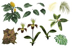 De tropische wildernisorchidee bloeit, exotische gele installatie, tropische palmbladen en installatiereeks vector illustratie