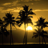 De de tropische Zonsondergang of Zonsopgang van het Palmensilhouet Stock Foto