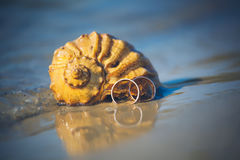 De trouwringen liggen op shell op het strand Stock Foto's