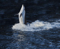 De truc van de dolfijn Stock Fotografie