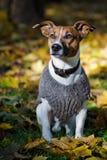De trui van de hond stock fotografie