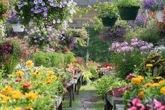 De tuin Royalty-vrije Stock Afbeelding