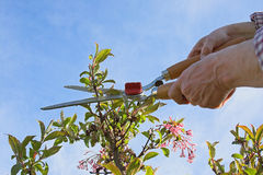 In de tuin Stock Fotografie