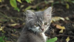 In de tuin in de binnenplaats zit een klein katje en verandert zijn hoofd in een kader stock videobeelden